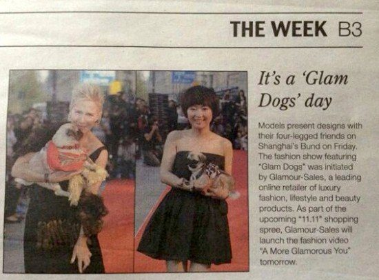 Shanghai Daily Glam Dog, the myndset digital marketing